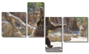 Великий счастливые танцы медведь