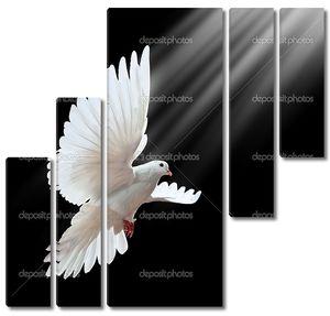 Свободный полет белого голубя, изолированные на черный
