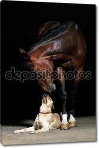 Лошади и собаки на черном