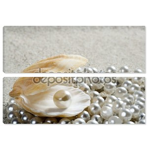Пляж белого песка жемчужной раковины моллюска макрос