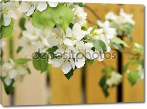 Яблоневый цвет на деревянном заборе