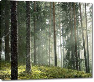 Сосновый лес ранним утром