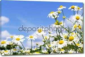 Белые ромашки в небе