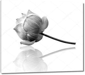 Цветок лотоса лежащий