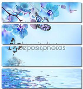 Тропические орхидеи и бабочки