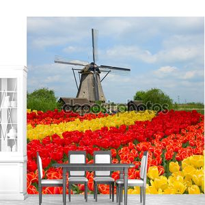 Голландская мельница над полем тюльпанов