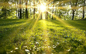 Солнце озаряет поляну