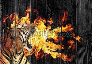 Портрет красивый Тигр