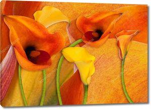 Желтые и оранжевые каллы