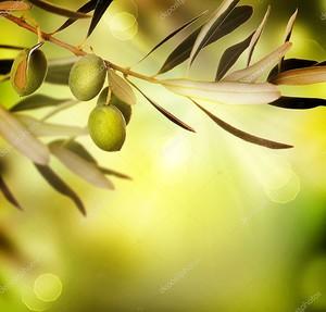 Веточка с зелеными оливами