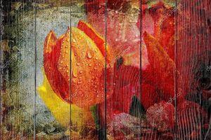 Винтаж тюльпаны с капельками воды