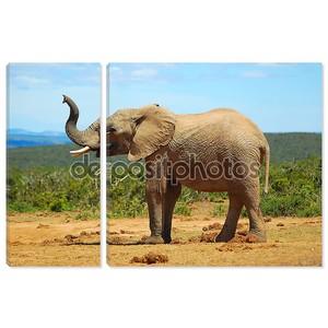 Африканский слон пахнущий