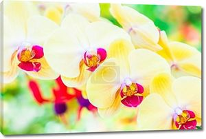 Красивые цветы орхидеи