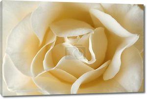 Белый цветок крупным планом