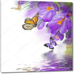 Весенние крокусы с бабочкой