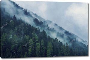 Туманный лес утром
