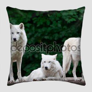 Арктических волков