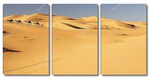 Караван верблюдов в Мерзуге, Марокко