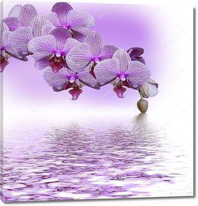 Красивая сиреневая орхидея