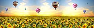Поле подсолнухов с воздушными шарами