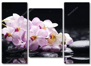 Веточка орхидеи на гальке