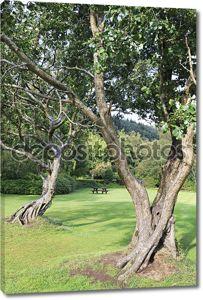 красивые вьющиеся деревья