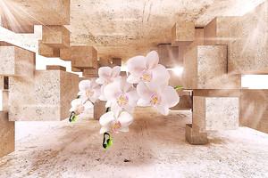Орхидеи и кубы
