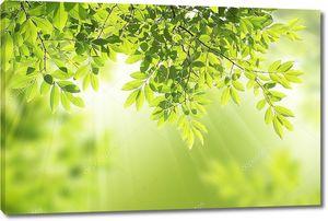 Зеленые листья в лучах солнца