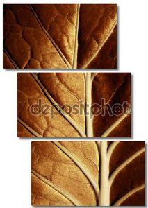 золотой лист