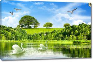 Лебеди летним утром