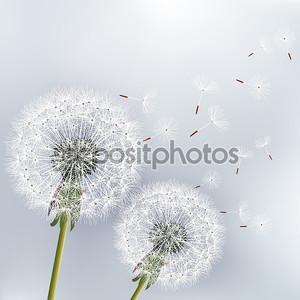 Стильный цветочный фон с двумя цветы одуванчики