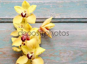 Красивые желтые орхидеи цветы на дереве