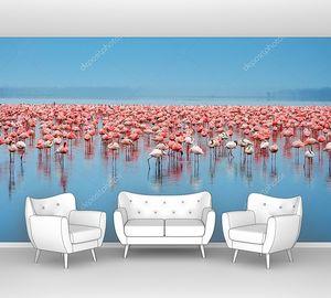 Стаи фламинго