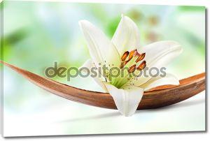 Красивые белые лилии цветок на пальмовый лист Коко