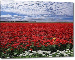 поле красных лютиков сада
