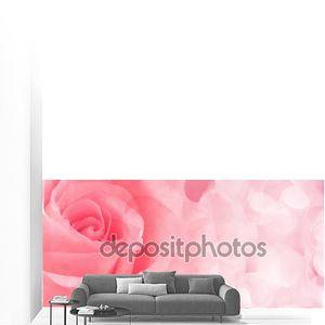 Красивая розовая роза закрыть