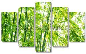 Зелень процветать бамбука фон
