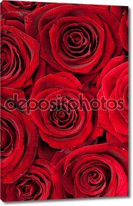 Фоновая текстура с розами