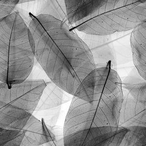 Бесшовные листья черно-белый фон.