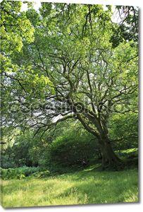 красивое дерево распространения в горном национальном парке Уиклоу.