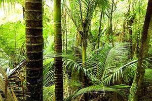 Тропический лес