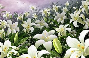 Цветок лилии на фоне тучи
