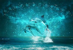 Три дельфина под созвездиями