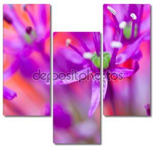 Макро съемка Лиловый цветок. выборочный фокус