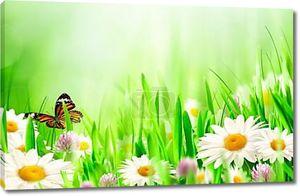 Прекрасный весенний фоны с цветами ромашки