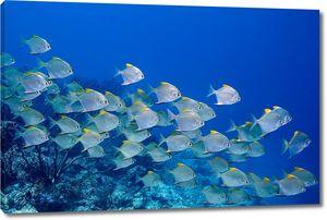 Косяк рыбы Дартс в море