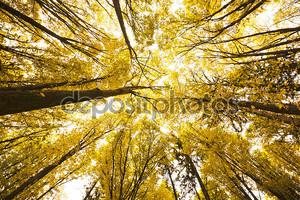 золотой осенний лес