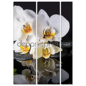 Концепция спа белой орхидеи (фаленопсис), дзен камни с падение