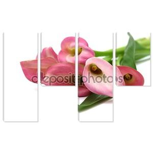 Букет розовых калл