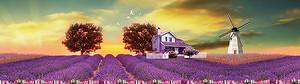 Сиреневый домик на лавандовом поле